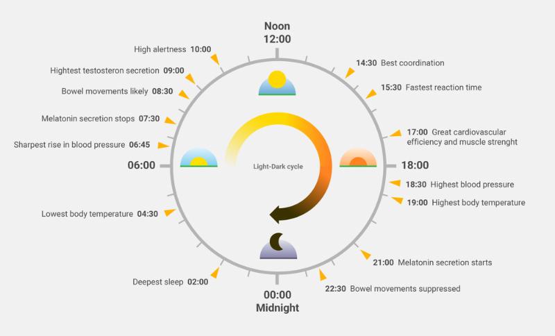 circadian-rythym